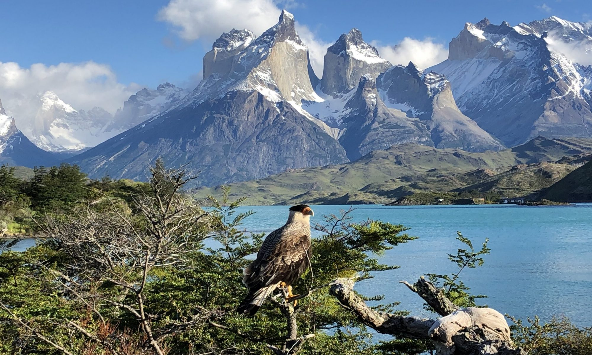 Travel Marmot